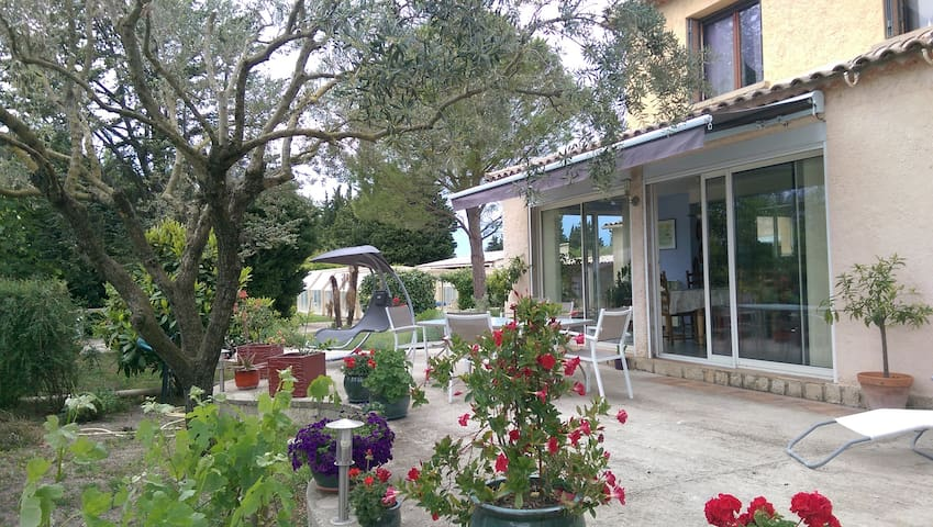 Le cèdre provençal