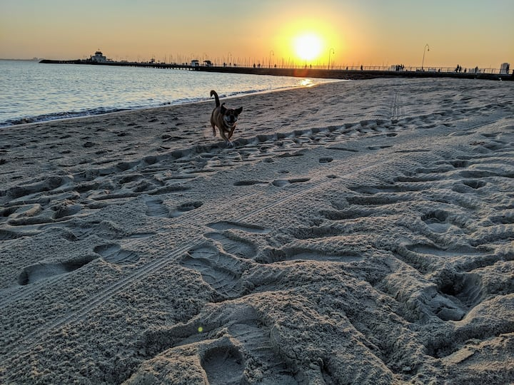 Dogs can run around at the sprawling beach