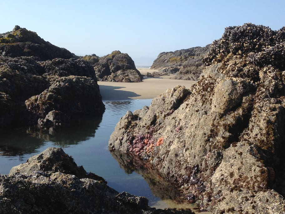 Tidepools like you've never seen before!
