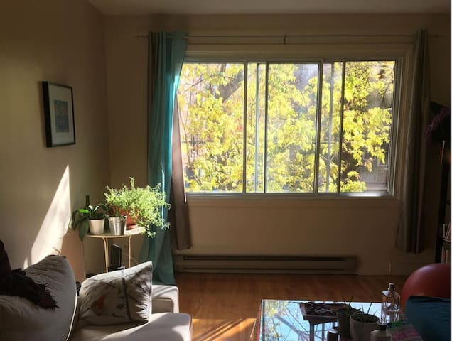 Cosy flat with flair near UDM