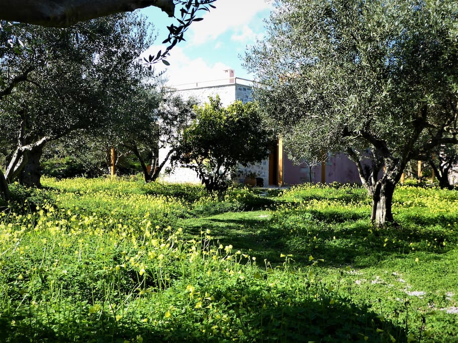 Surrounded by a carpet of lush green growth and flowers... tucked away in the olive grove