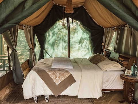 ACACIA GROVE | The Right Inn-Tent