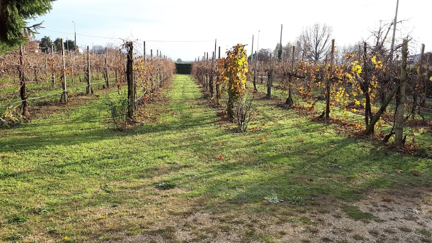 La vigna di Carlo - Carlo's vineyard - Bed & wine