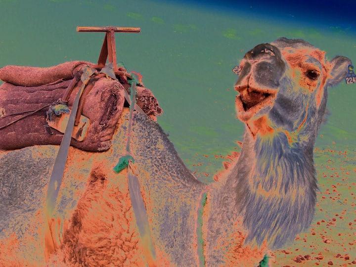 Aventure Camel Superstar ! Trek sur 3 jours/2nuits