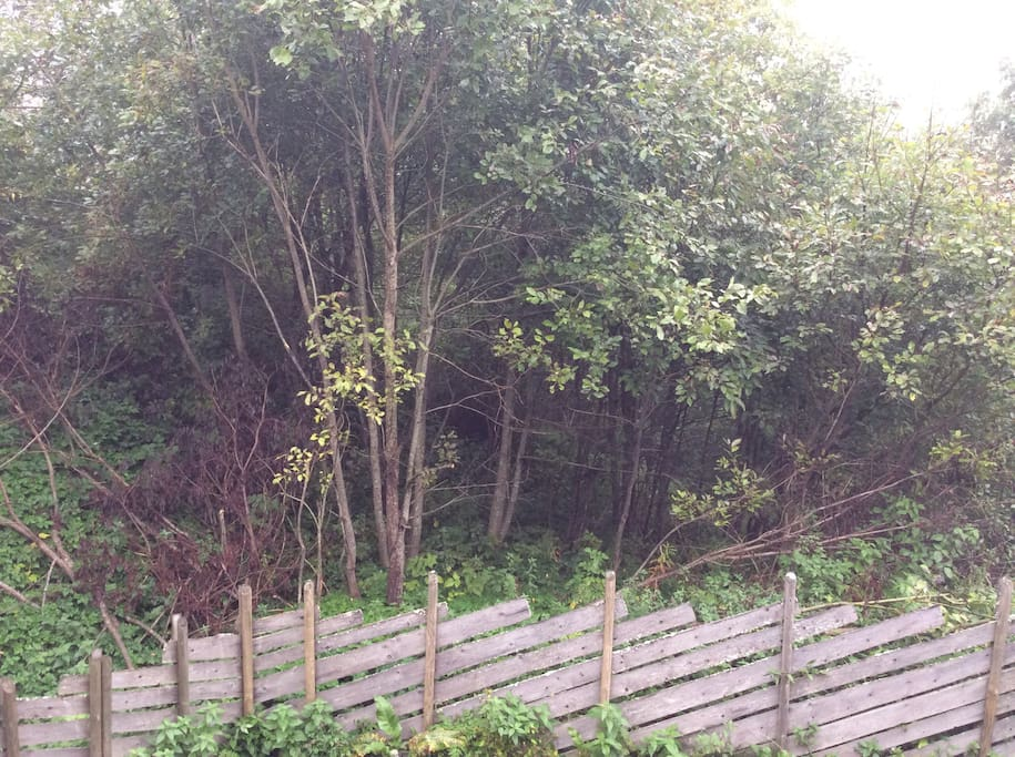 Grønne omgivelser. Green surroundings.