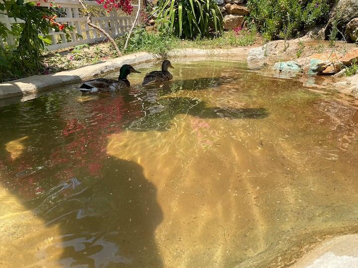 Özel Bahçeli, Özel Girişli Otoparklı Bungalow B2