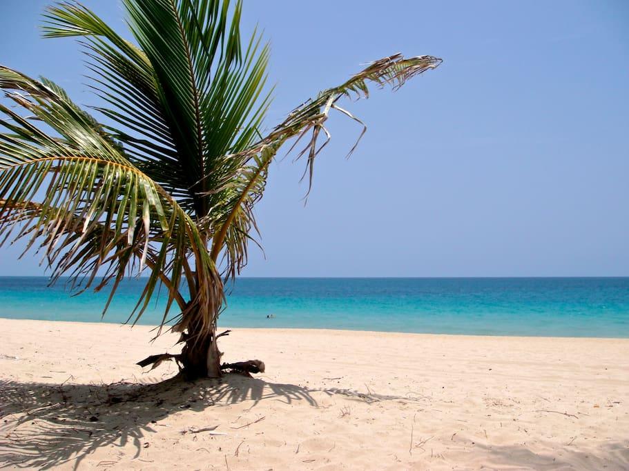 Ocean Park Beach 2 blocks away