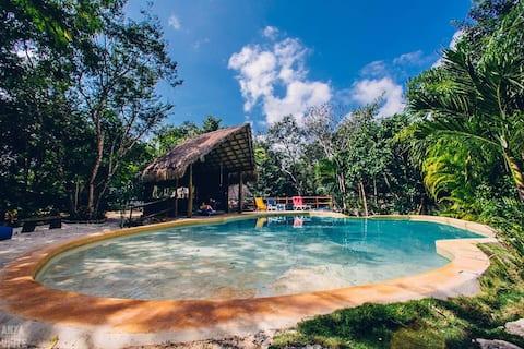 Art Jungle Room with a Private Cenote