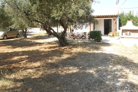 Little house in Olive trees