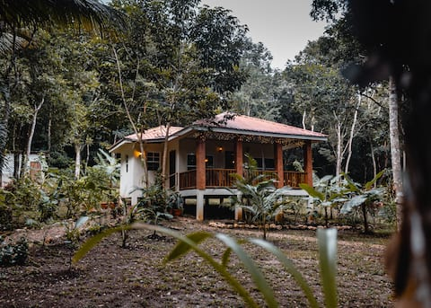 Jungle view cabin#2 w/ car rental- GOLD STANDARD