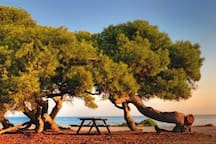 """""""pefkias"""" - pine tree forest by the sea -20 min from earth's garden"""