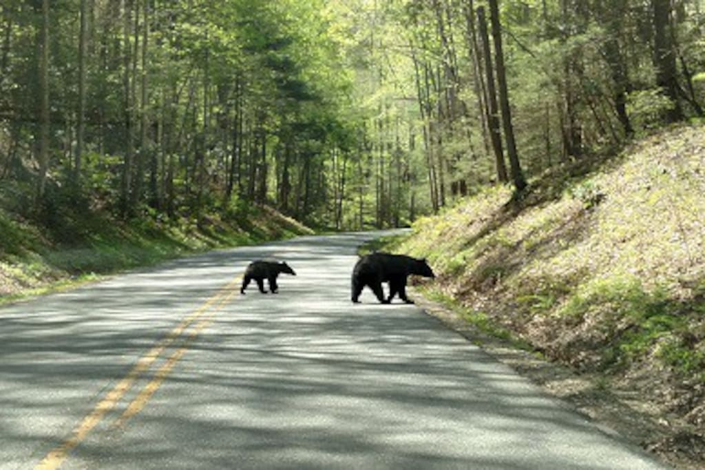 We are only 23 miles from Cades Cove in the Great Smoky Mountains National Park, where you might see black bears.