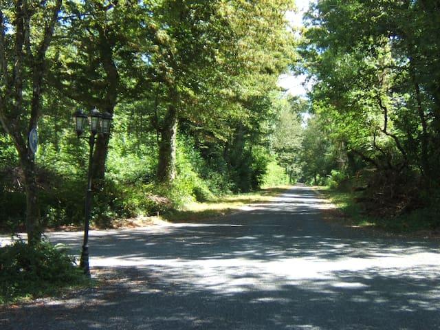 Gîte côté bois - Méry-és-Bois - Hus