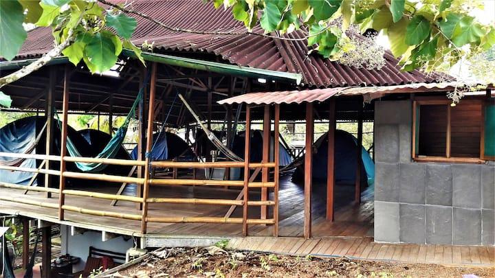 Manu Rescue Center -  Camping in  Manu Park