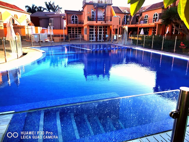 DAISY Palmeral Oasis