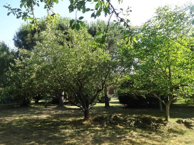 Le fond du jardin avec ses beaux arbres