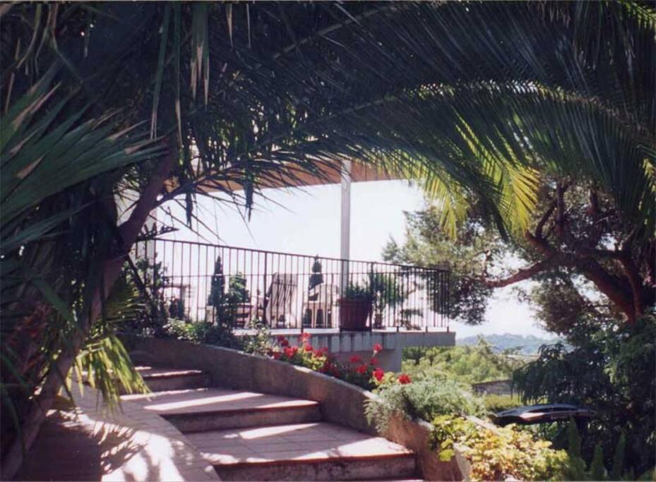 Beau jardin avec une collection de palmiers
