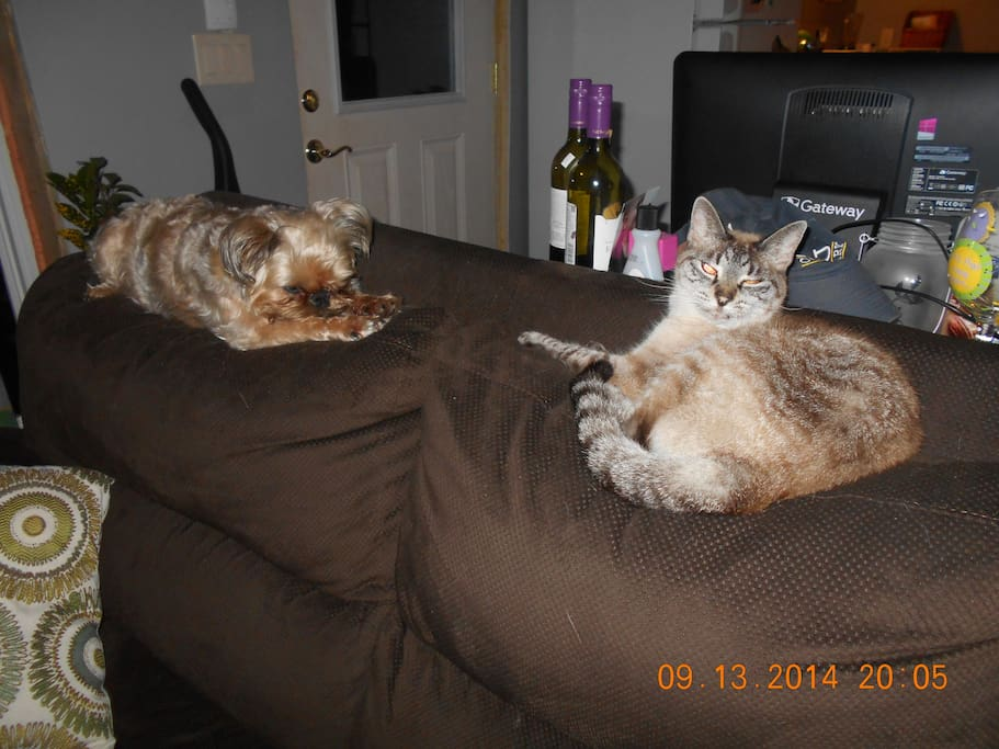 Nina, 9 year old Brussels Griffon, and Squeaker, our 18 year old Siamese.  Nina will be here to greet you at the door and Squeaker will no doubt be hiding.