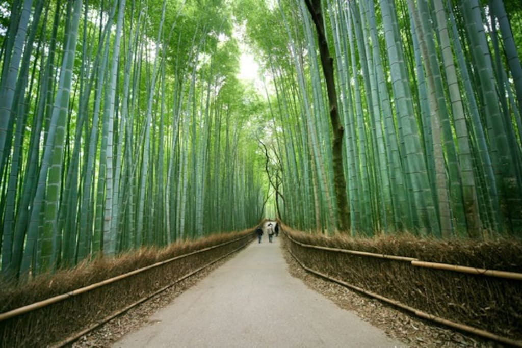 5 mins by train to Arashiyama bamboo forest