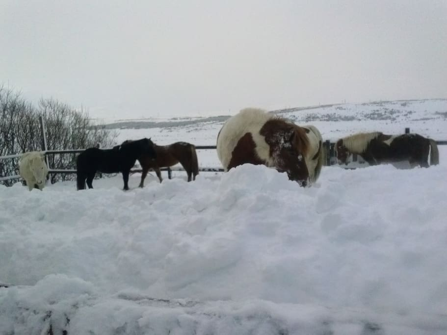 Our horses :)