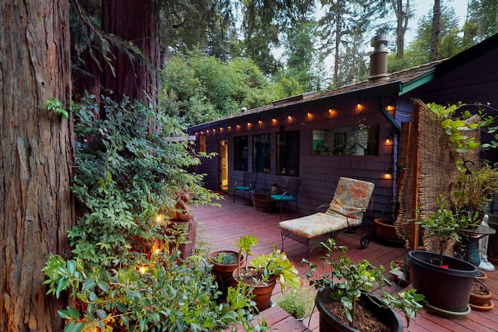 Relax surrounded Redwood trees!