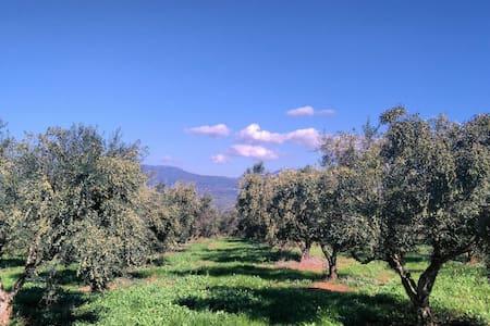 Olive Oil Farm - House
