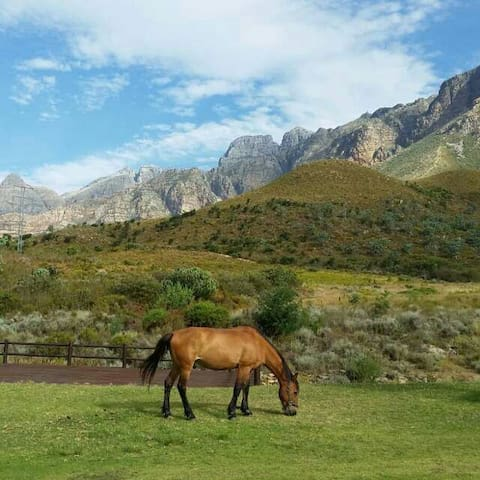 Heavenly mountain cottage - Paarl - House