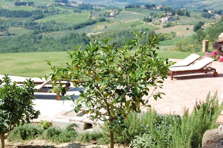 The lemon tree in the garden