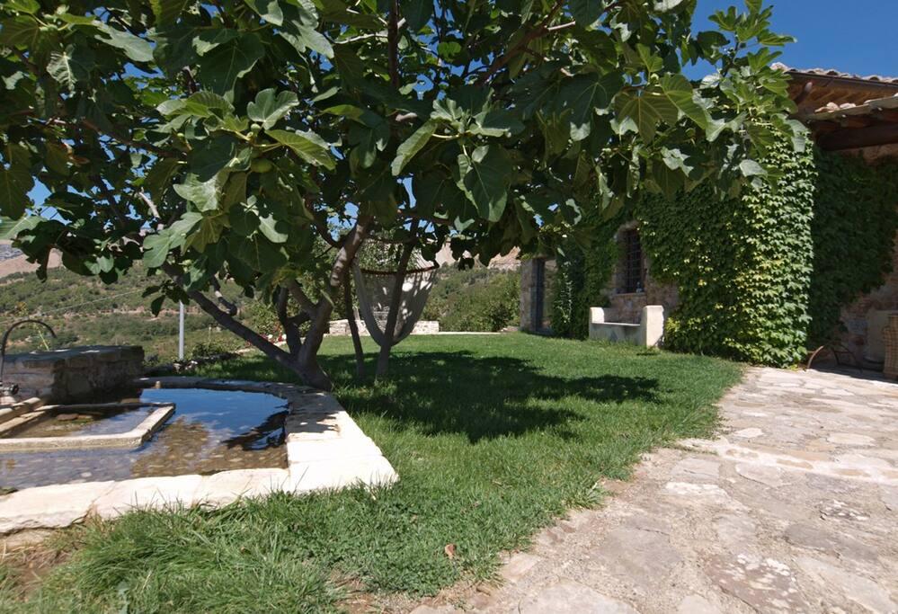 Un angolo del giardino con fontana