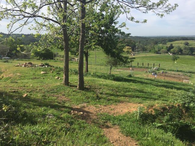 Regenerative Farm Life - Calla Lily - Lincoln