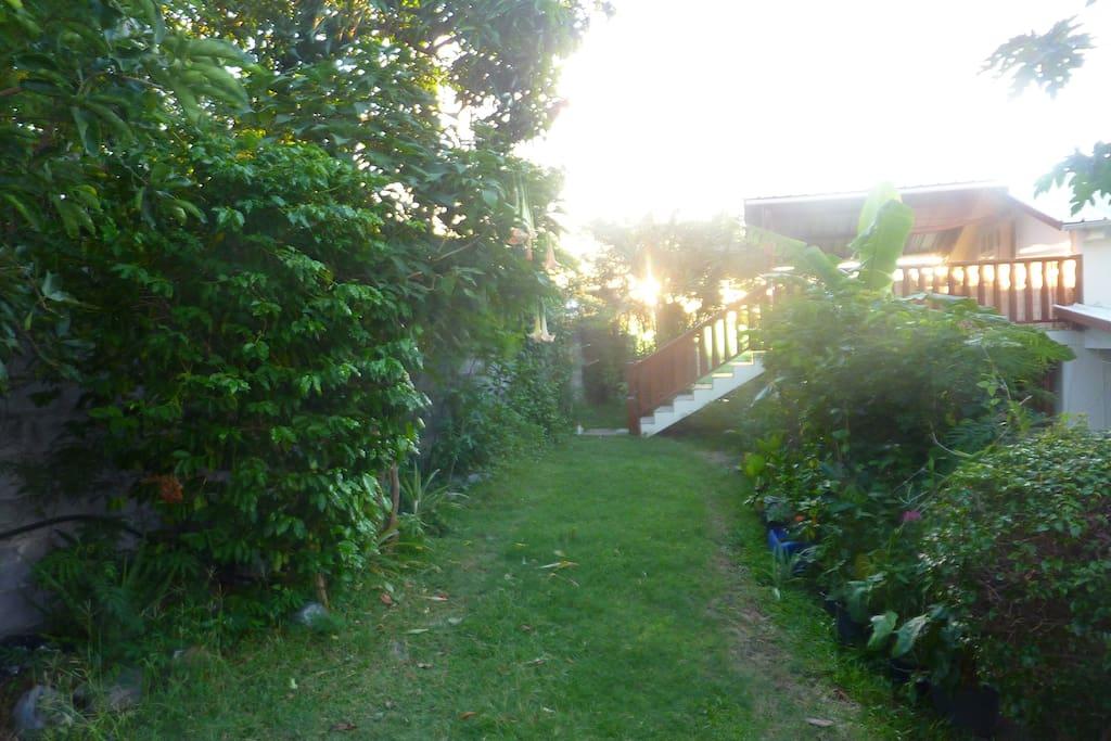 Jardin verdoyant en saison
