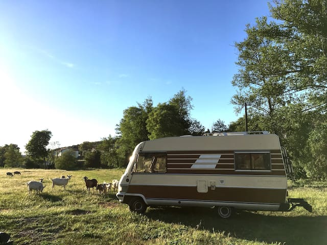 Sleep in a cute old campervan close to the beach!