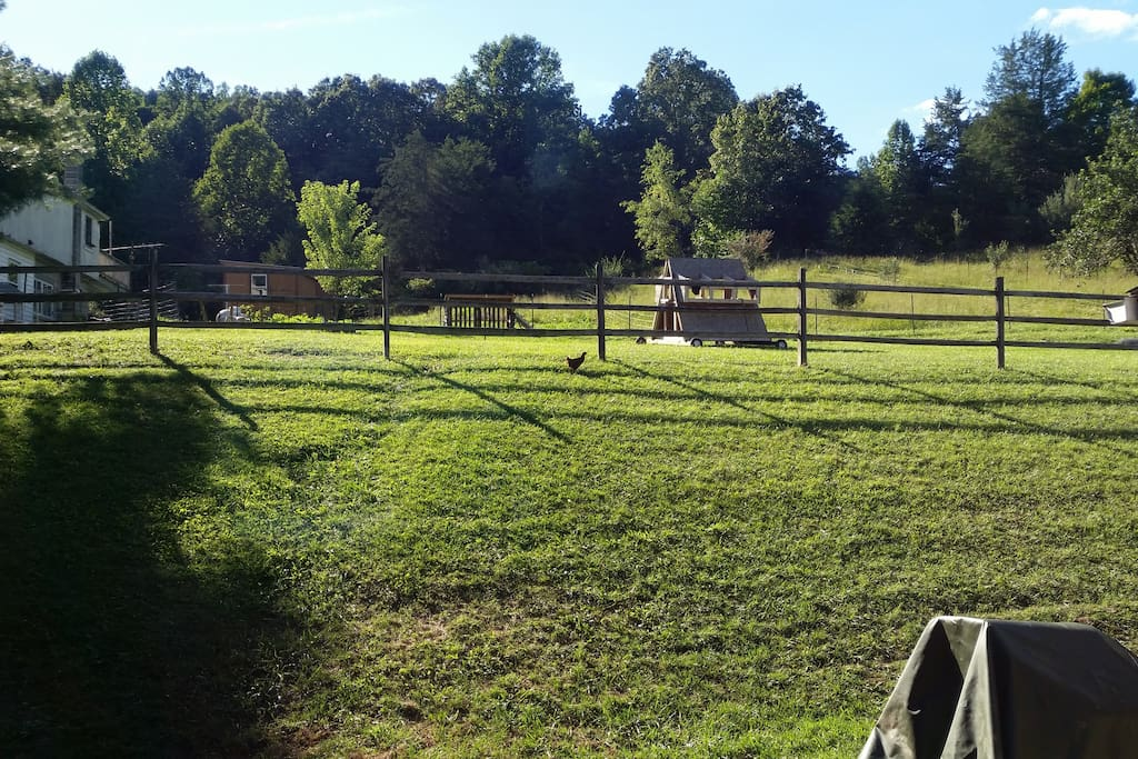 View from bedroom window.  Enjoy the view of our small family farm life which includes chickens (baby and adult), 2 baby goats, and a calf named Juice Box.