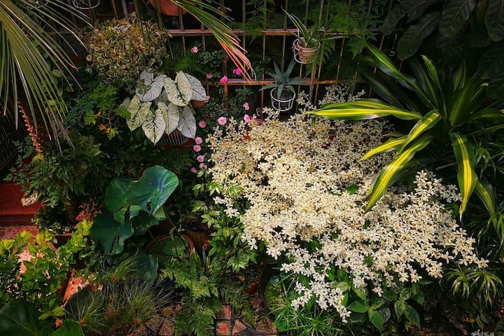 「植屋」森林蓝   东山口百年民国红砖老别墅   庭院设计师的私人植物园