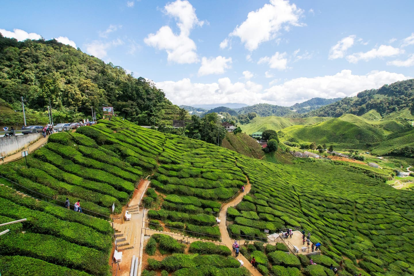 Cameron Valley Ringlet Tea Plantation just 14kms away from our place and on the way up from Tapah