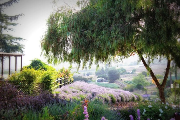 Lavender Farm Provincial Guest House - Valley Center - Guesthouse
