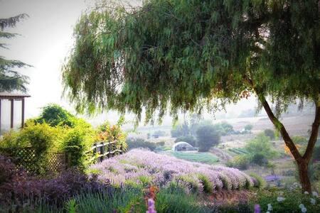 Lavender Farm Provincial Guest House - Valley Center - Rumah Tamu