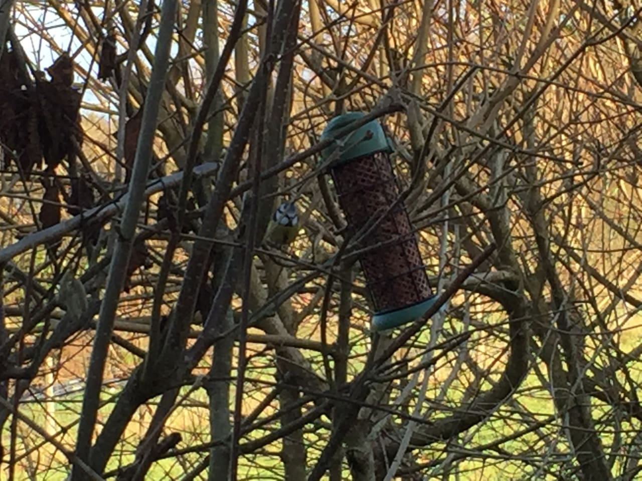 A bird feeder hangs just outside the kitchen window and attracts an array of breeds.