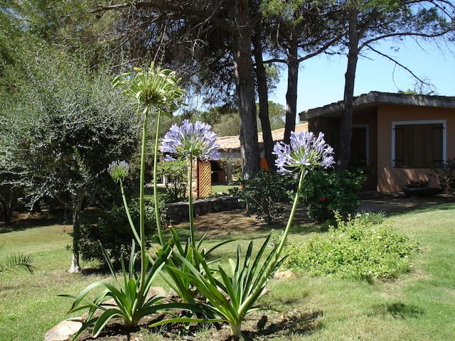 Agapanthus House, a seaside oasis, P0059