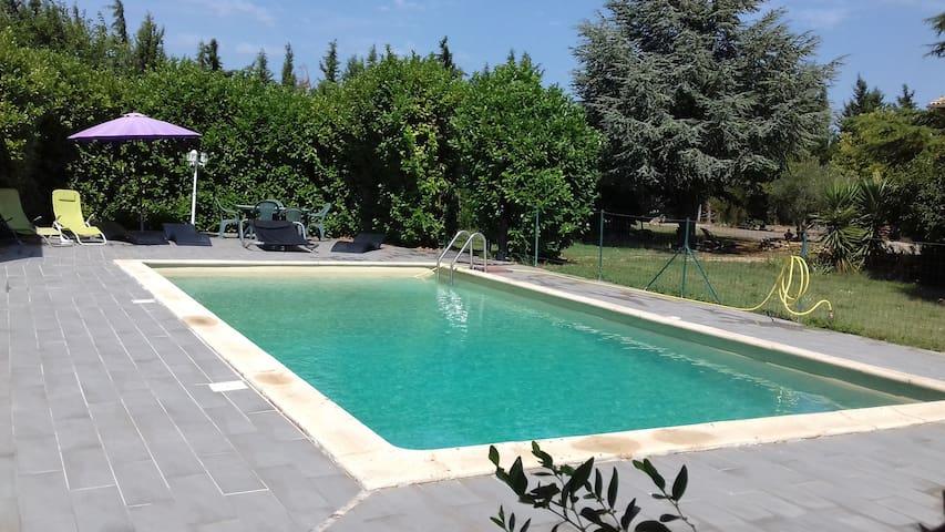 Les oliviers en Provence