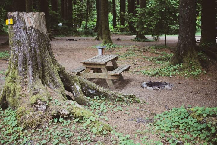 Campsite #8 · Forest Campsite