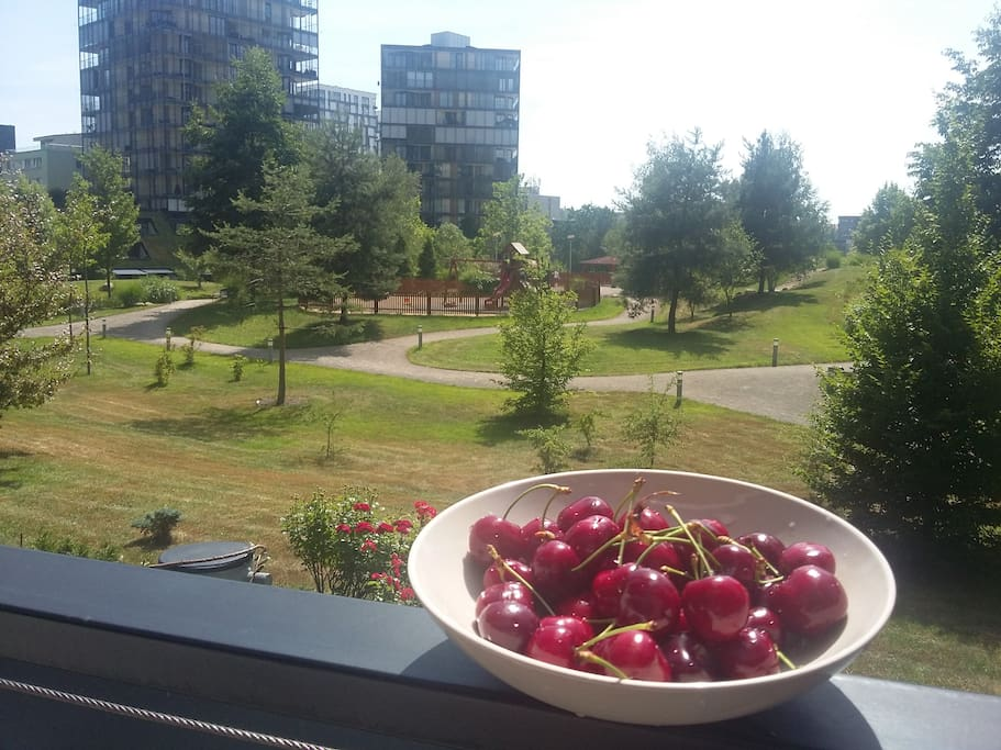 In Prague, ripe cherries! / В Праге созрела черешня!