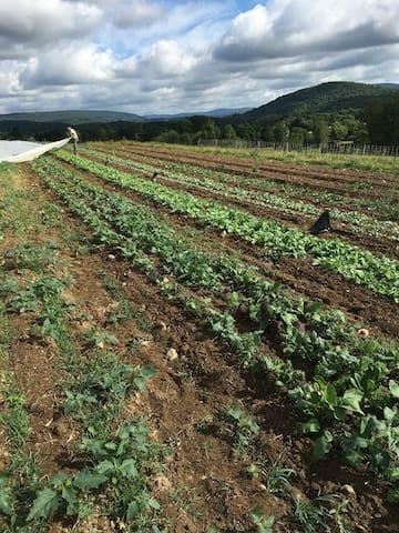 Lineage Farm Cabin - Copake