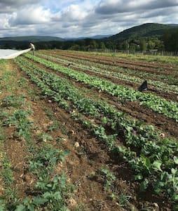 Lineage Farm Cabin - Copake - Srub