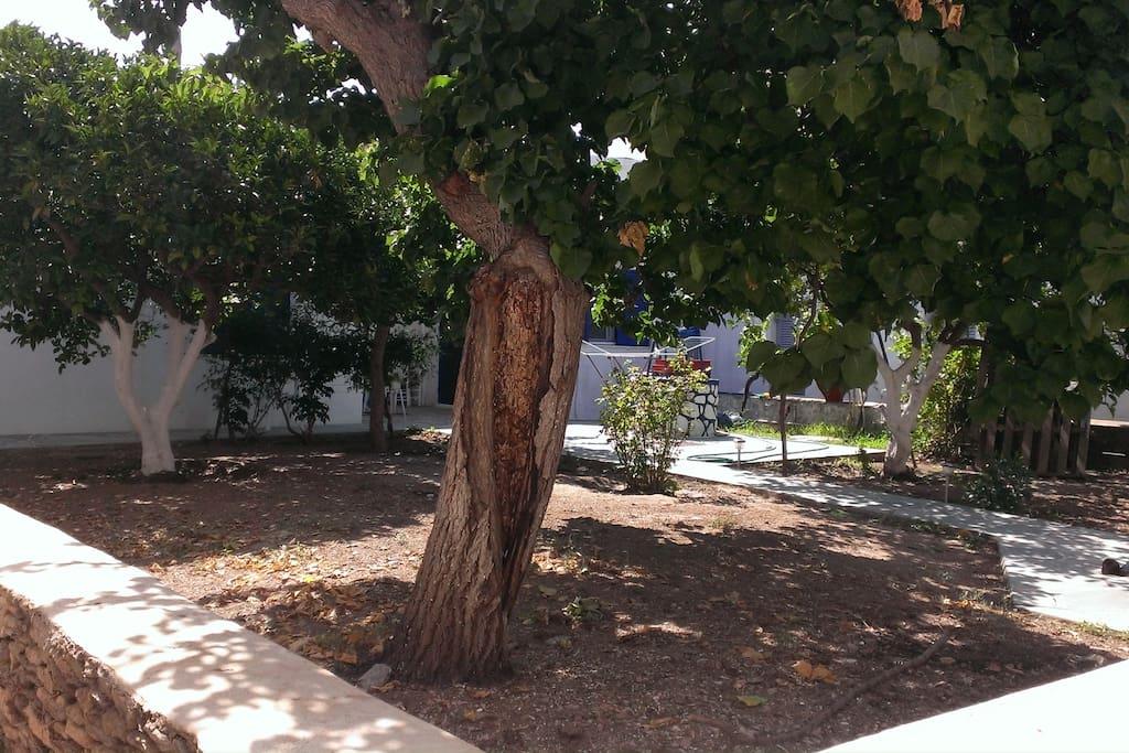 Garden view (apricots, pomegranates, lemons, oranges and jasmine)