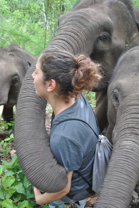 Interact with our elephants by bringing them fruit.