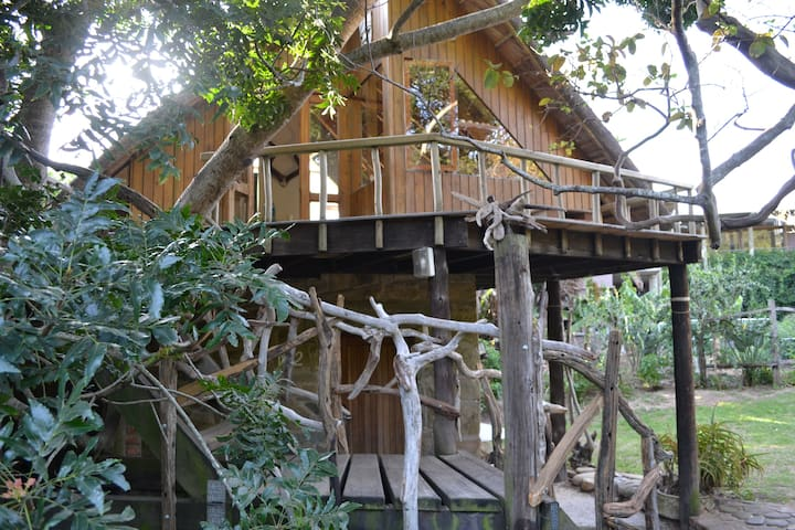 Driftwood Treehouse by the Sea