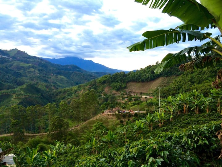 Stay on a traditional boutique coffee farm:Rey Sol