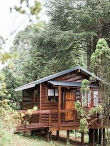 Mountain Fly Fishing- Malachite Cottage