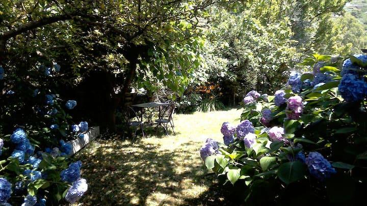 Casa, vigneto, giardino, vicino lago e ciclabile